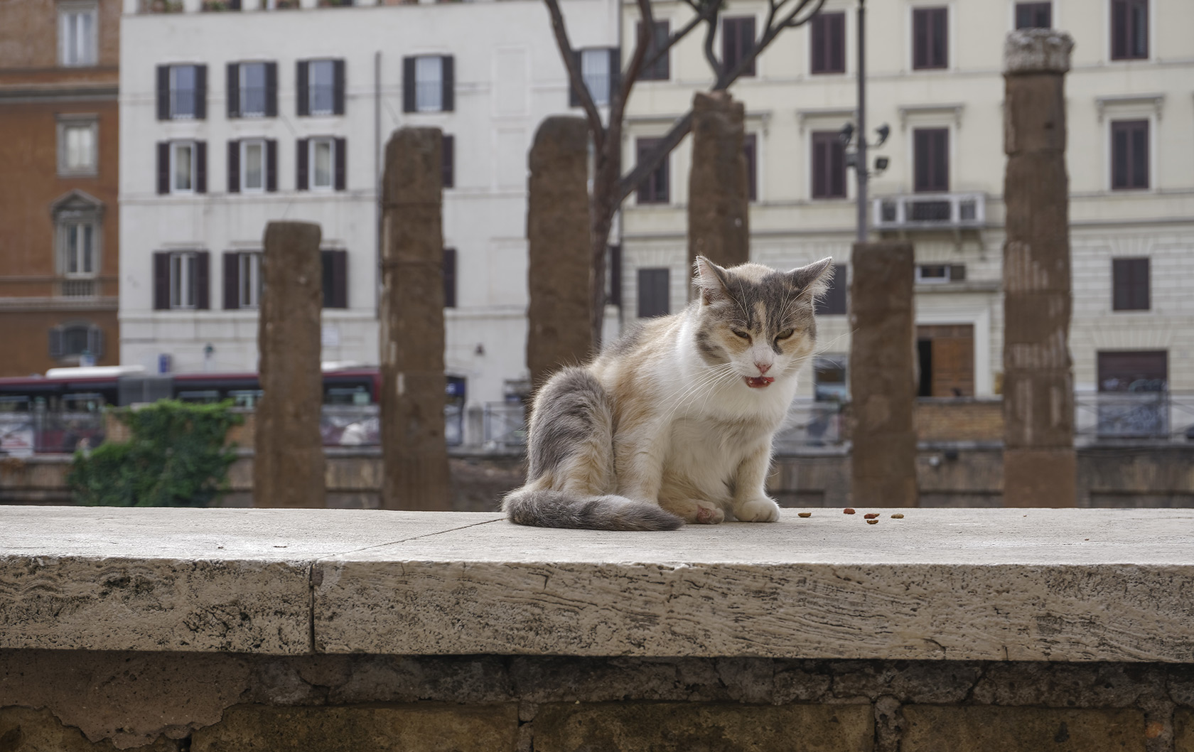 Rome's Largo di Torre Argentina Where Cats Sunbathe Amidst Roman History
