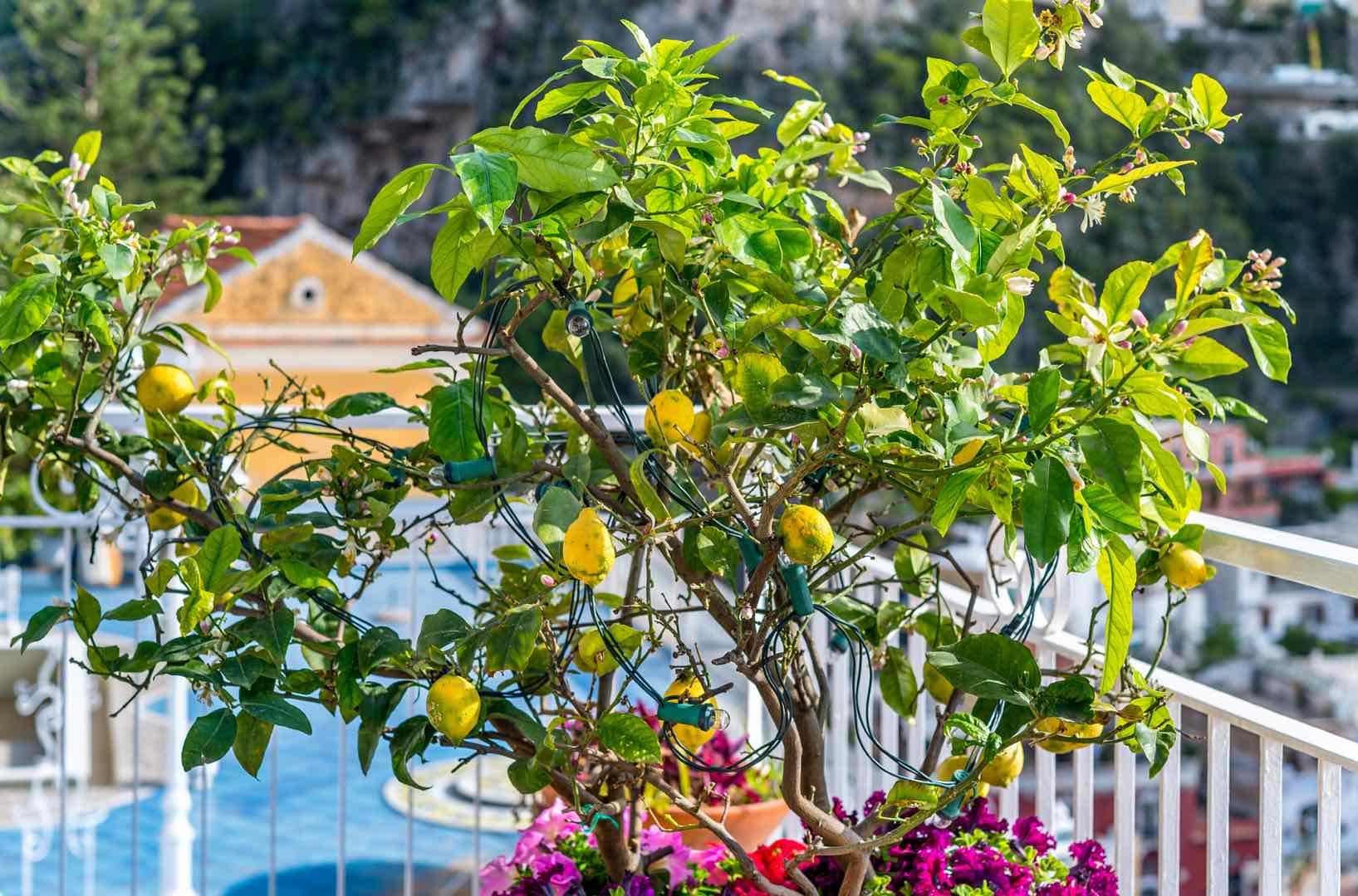 5 Books to Read Before Visiting Italy by Italy Perfect Lemon Tree