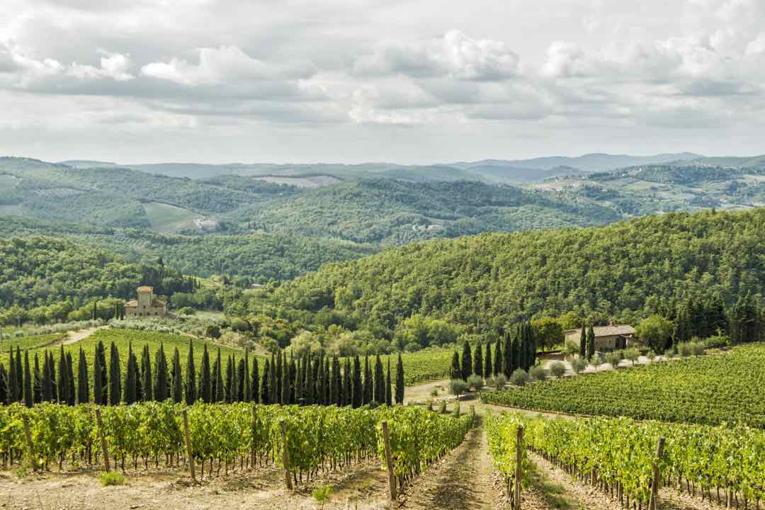 Albola Vineyard in Tuscany
